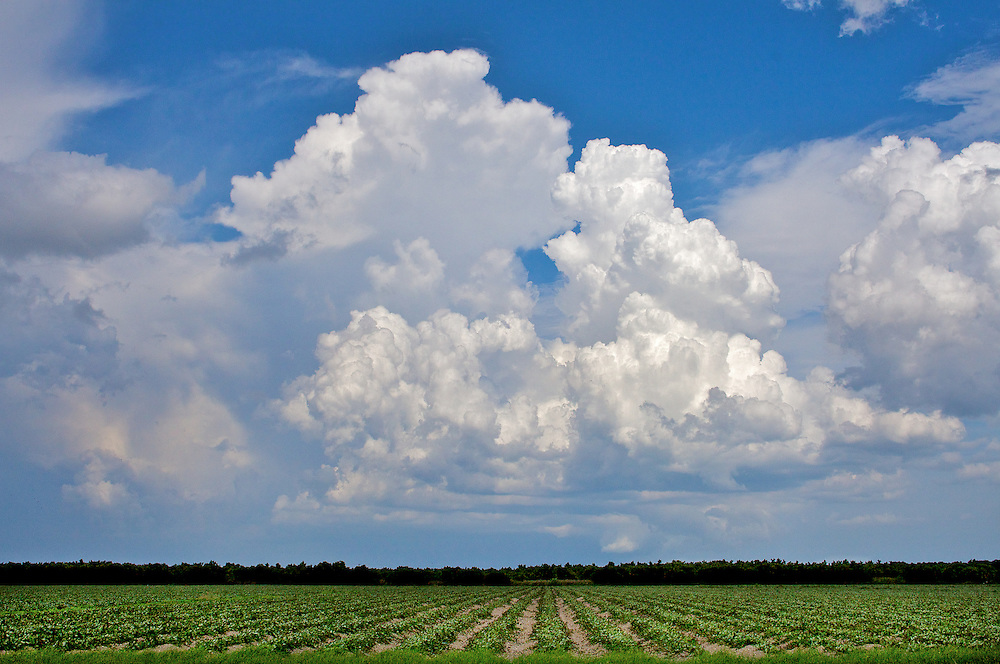 Fields Off Krome Ave. Miami-Dade County, FL 8/08
