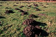 A5EXN4 Mole hills in field