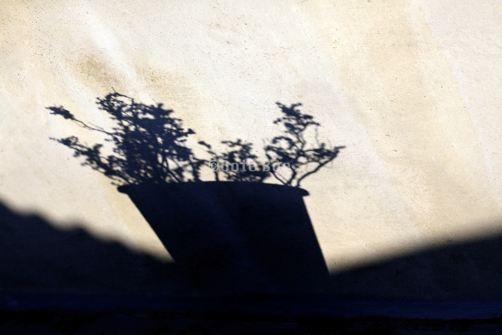 potted thyme plant shadow on a weathered wall