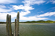 Cao Frio_RJ, Brasil...Detalhe de um cacto com a praia em Cabo Frio ao fundo...A cactus detail with the beach in Cabo Frio in the background...Foto: JOAO MARCOS ROSA / NITRO..