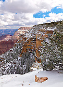 Fresh white snow blankets the south rim of the Grand Canyon, contrasting nicely against the reds and purples of the canyon wall.