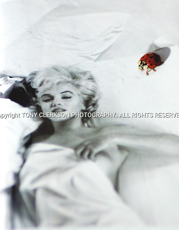 A ladybird walks across a photo of Marylin Monroe
