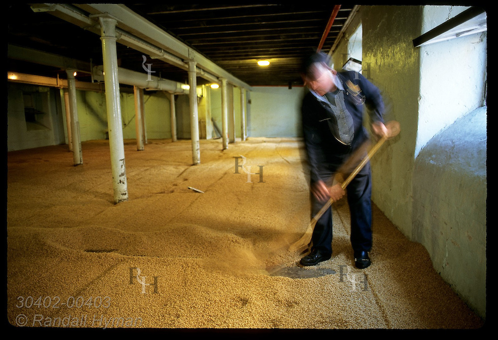 Worker spreads germinating barley in malting room @ Highland Park Distillery; Kirkwall, Orkney Is. Scotland