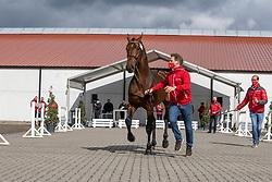 131, Rock Star Ter Putte<br /> Hengstenkeuring BWP- Azelhof - Lier  2021<br /> <br /> © Hippo Foto - Dirk Caremans<br /> 12/04/2021
