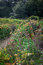 General view of  dahlias and seedheads in the cutting garden at Chatsworth House. Pear arch