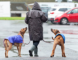 © Licensed to London News Pictures. 16/08/2019. Llanelwedd, Powys, UK. Wet and windy weather on the first day of The Welsh Kennel Club Dog Show, held at the Royal Welsh Showground, Llanelwedd in Powys, Wales, UK. Photo credit: Graham M. Lawrence/LNP