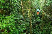 Costa Rica 1-14_23-09 Rainforest Aerial Tram.