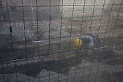 Workman bends into hole behind industrial screen in Florence street.