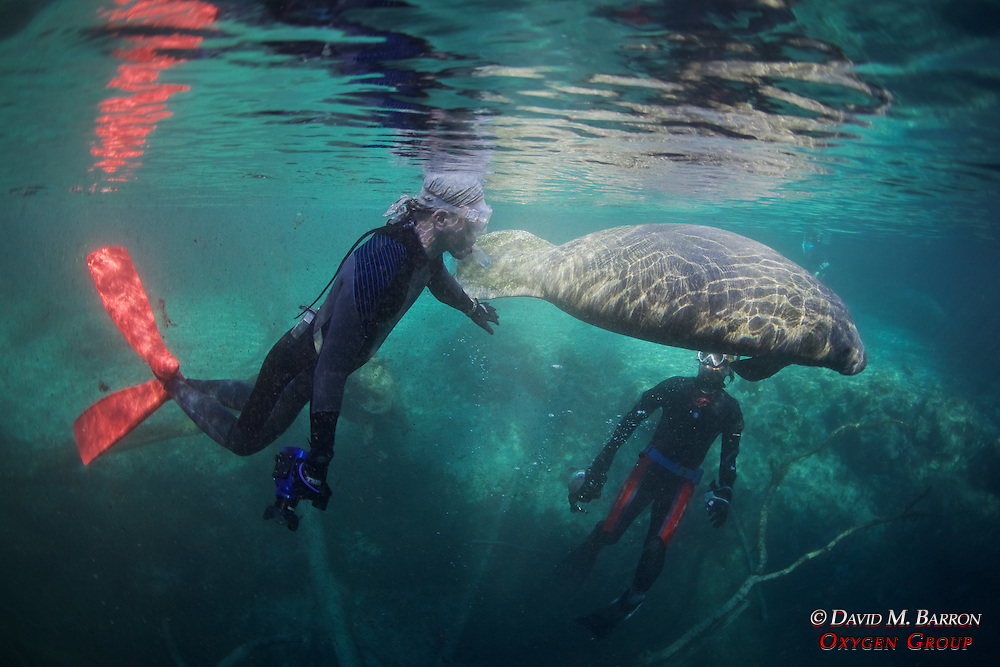 People With Manatee At Three Sisters Spring