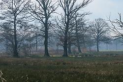 Beekbergerwoud, Klarenbeek, Gelderland, Netherlands