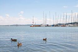 Ducks in Lake Balaton with Balatonfured harbour in background, Hungary