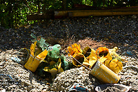 Recycling plastic bottles as planters painted yellow