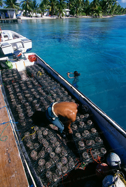 Divers arrive at Breijos Farm with Boat of Oysters with Pearls.