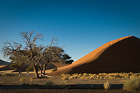 People Walking up Dune 45 in the Namib-Naukluft National Park, Namibia