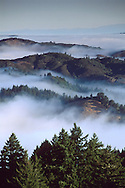 Morning fog and clouds shroud tree forest mountain slopes Mount Tamalpais Marin California Coastal fog in morning and trees on the forest hillsides and ridges near Mount Tamalpais State Park, Marin California