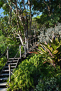 Steps up through tropical plants to a viewing platform in Hyde Park Garden, St. George's, Grenada, West Indies, The Caribbean