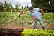 Farmers tending their vegetables at Adelante Mujeres Farm in Forest Grove, Oregon.