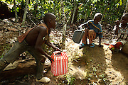 Samson Apia Kouadio, 6, (R) Tanic Kouakou, 8, (C) and their cousin Firimin Kouassi, 13, (L) get water from a small pond on Samson and Tanic's father's cocoa plantation near the town of Moussadougou, Bas-Sassandra region, Cote d'Ivoire on Monday March 5, 2012.
