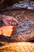 Sorting Fish.