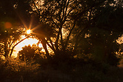 Sunrise through trees in Mana Pools National Park, Zambia