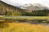 Pond lilies in Cub Lake  below 12,928 ft. Stones Peak.  Rocky Mountain National Park, Colorado