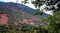 Berber houses in the Ourika Valley, Morocco, North Africa<br /> <br /> (c) Andrew Wilson | Edinburgh Elite media