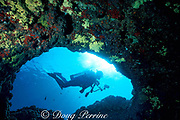 diver and underwater arch<br /> Lanai, Hawaii, USA ( Pacific )