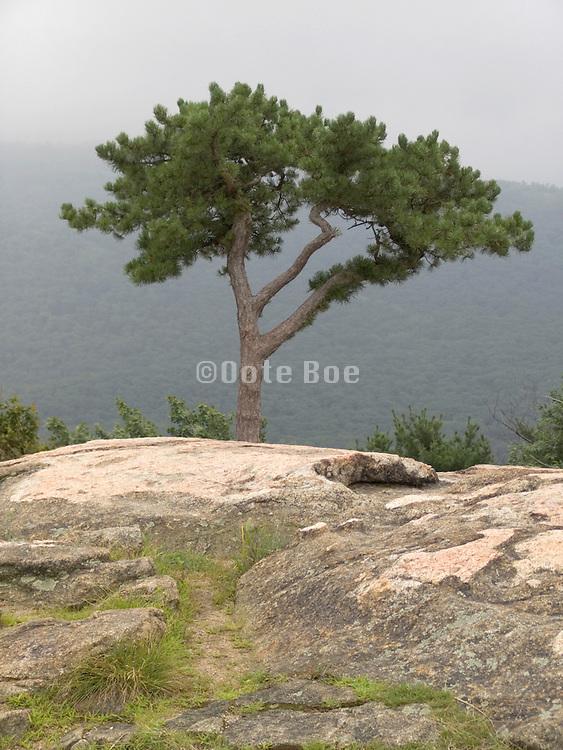 a tree by itself growing on rocks