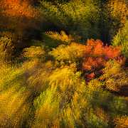 """Foliage of the Mohican Valley as viewed from Mohican State Park Gorges Overlook during golden hour, with in-camera multiple exposure rotate and zoom (MERZ) technique to accentuate the """"fiesta"""" of color and light. Image earned a place in North American Nature Photography Association (NANPA) 2015 Showcase and was published in NANPA Expressions  journal. Published in Landscape Photography magazine, Wall of Fame feature, Issue 79/Sept. 2017."""