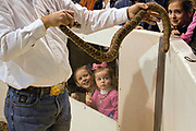 Young girls react to a Jaycee volunteer snake handler showing a western diamondback rattler during the 51st Annual Sweetwater Texas Rattlesnake Round-Up March 14, 2009 in Sweetwater, Texas. During the three-day event approximately 240,000 pounds of rattlesnake will be collected, milked and served to support charity.