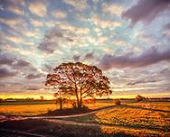Sunrise through tree, Cutchogue, NY