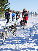 Alice White of Finland, MN sets off on her ten-dog class sled race on Sunday, 2 Feb 2014. Scenes from the Apostle Islands Sled Dog Race, hosted by the Bayfield Chamber of Commerce, near Bayfield, WI