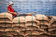 "15 NOVEMBER 2012 - PATHUM THANI, PATHUM THANI, THAILAND:  A worker takes a break on top of bags of government purchased rice in a rice warehouse in Pathum Thani. The Thai government under Prime Minister Yingluck Shinawatra has launched an expansive price support ""scheme"" for rice farmers. The government is buying rice from farmers and warehousing it until world rice prices increase. Rice farmers, the backbone of rural Thailand, like the plan, but exporters do not because they are afraid Thailand is losing its position as the world's #1 rice exporter to Vietnam, which has significantly improved the quality and quantity of its rice. India is also exporting more and more of its rice. The stockpiling of rice is also leading to a shortage of suitable warehouse space. The Prime Minister and her government face a censure debate and possible no confidence vote later this month that could end the scheme or bring down the government.   PHOTO BY JACK KURTZ"