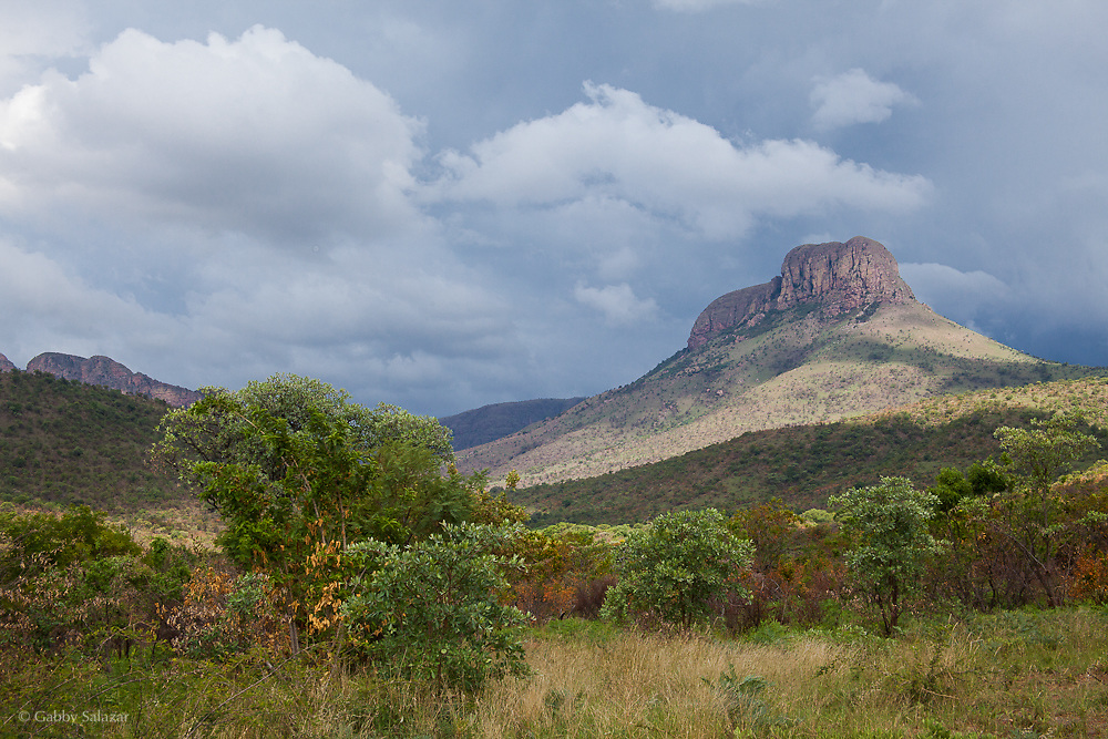 Marakele National Park. South Africa. Organization for Tropical Studies Trip 2009.