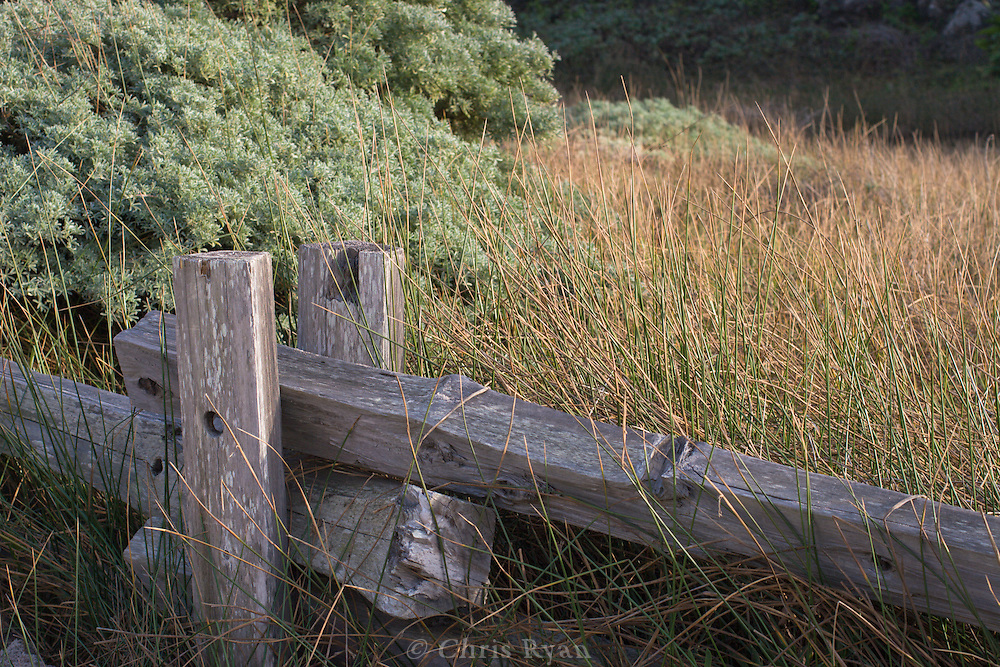 Wood fence and wild grasses, Big Sur, California