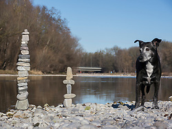 Black dog standing at Isar river with stack of rocks, Bavaria, Germany