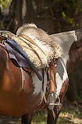 Detail of horses saddle, Estancia Huechahue, Patagonia, Argentina, South America