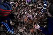 Jacob Coutermarsh, 7, gets buried in leaves by his brother Tyler, 9, left, and his neighbor Hunter Grant, 5, right, in Grant's front yard in Lebanon, N.H., Wednesday, November 11, 2009. <br /> Valley News - James M. Patterson