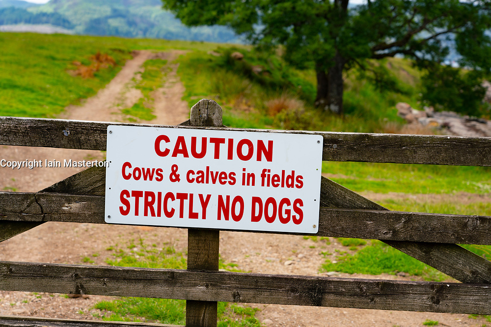 Sign on farm gate warning that no dogs are allowed because of cows and calves in field, Isle of Bute, Argyll and Bute, Scotland, UK