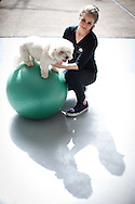 September 28th, 2011. Los Angeles, California. Canine rehab facility Two Hands Four Paws offers treatments like acupuncture, massage, and swim therapy for dogs. Pictured is Lou the Bichon on the physic ball..PHOTO © JOHN CHAPPLE / www.johnchapple.com