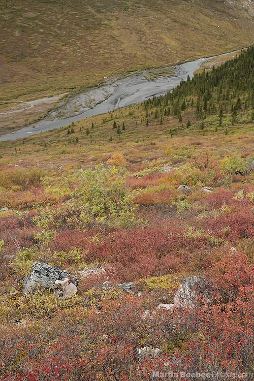 Fall color on the tundra above Savage River, Denali National Park, Alaska