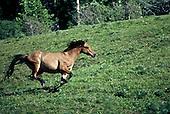 Livestock Photography