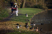 Cyclist walks beside a pond in the in the Vondelpark, Amsterdam