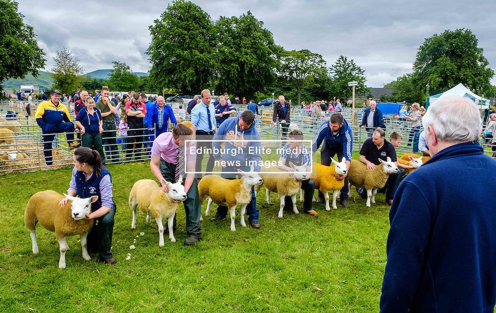 Biggar, South Lanarkshire, Scotland 23 July 2016<br /> <br /> Showing Texel sheep in the show ring.<br /> <br /> (c) Andrew Wilson | Edinburgh Elite media