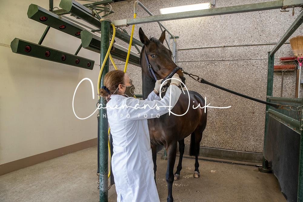 Neuswisser voor paarden bij onderzoek naar Rhinovirus<br /> DBP Veterinary Services - Moerbeke Waas 2021<br /> © Hippo Foto - Dirk Caremans<br /> 03/03/2021