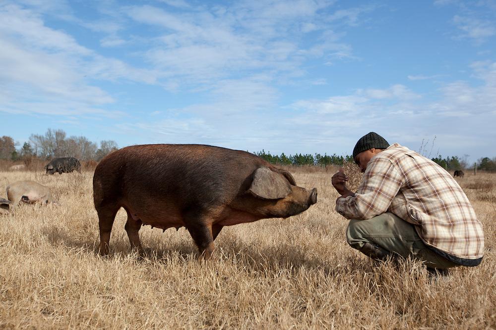 Eufren Ninancuro, master swinehearder for Caw Caw Creek Farm, calls over a Tamworth sow, in St. Matthews, outside of Columbia, South Carolina.