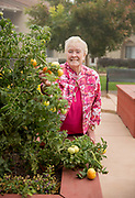 Senior women looking at camera picking a tomato
