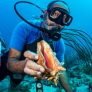 Commercial fisherman Andres Maldonado shows off a juvenile queen conch (Lobatus gigas) off Cabo Rojo, Puerto Rico. The conch was too small to keep so he set it back on the seabed after the image was made. Andres noticed drastic and obvious declines in fish numbers and habitat availbale after Hurricane Maria in 2017 which put many other commercial fisherman out of business. Queen conch, once his main catch, were completely wiped out at depths under 70 feet. In 2020, three years after the storms, he is starting to find the odd juvenile, but he must rely on other species to make a living. Image release available.