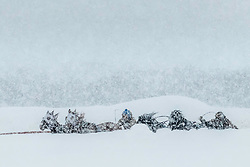 Blizzard Chariot Races in Afton Wyoming, the heavy snow was amazing.