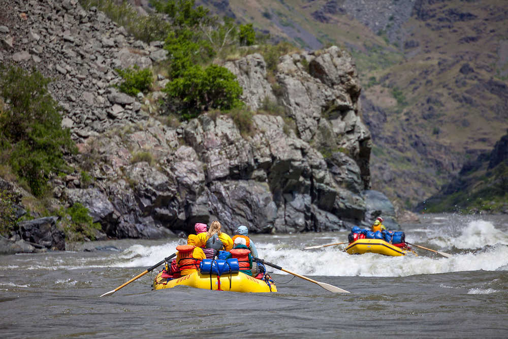 Two inflatable yellow river rafts navigate some white water rapids on the Snake River in Hells Canyon.  Licensing and Open Edition Prints